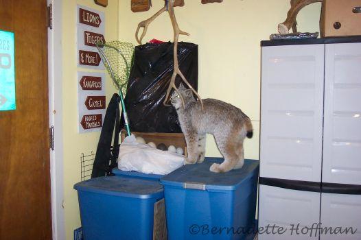Caribou antlers....mmnn
