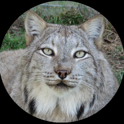 Max Canada Lynx