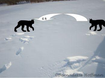 Snow Leap