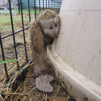 Poor Mr. Monkey