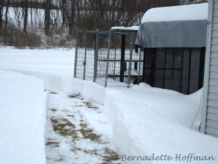 Path to Max's enclosure deep in snow