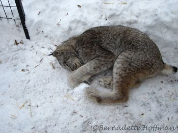 Playing with a snowball