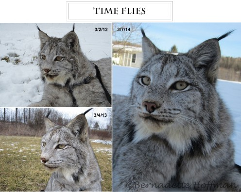 Time Flies2