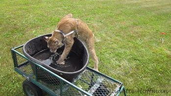 7-19-15 Max and his tub4