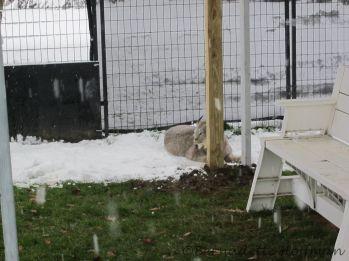 Max still prefers the snow
