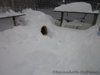 Shoveled out his doghouse