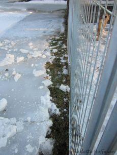 Chopping ice!