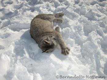 Snow loving