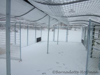 Heavy snow lying on Max's wire roofing