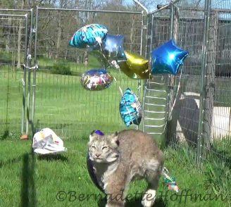 Balloons chasing Max!