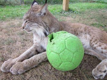 Max ignoring the ball